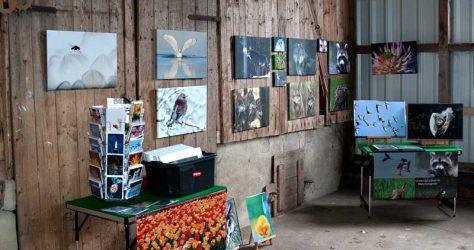 Bilder Olaf Krause - KUNST-stückchen 2015